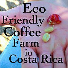 Starting an Eco Friendly Coffee Farm in Costa Rica