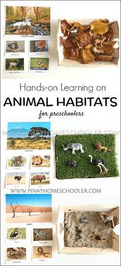 Hands-on Learning on Animal Habitats for Preschool, Preschool At Home, Preschool Science, Science For Kids, Kindergarten Activities, Learning Activities, Preschool Activities, Earth Science, Rainforest Activities, Preschool Family