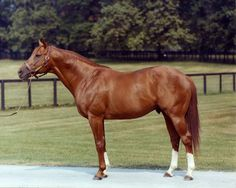 Own a horse as gorgeous as Secretariat (never gonna happen but I can always dream) Racehorse, Horse Love, October 4, All The Pretty Horses, Beautiful Horses, He's Beautiful, Horse Racing, Race Racing, Kentucky Derby
