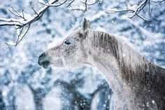 Horses In Snow, Wild Horses, Winter Time, Goats, Pony, Most Beautiful, Animals, Colour, Pretty