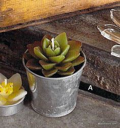 Charming galvanized iron pots are filled with four varieties of succulent…