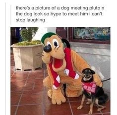 19 Photos Of Funny Animals That Will Help You Get Through All The Fuckery