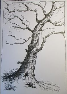 Pinturas e debuxos: Bosquexo
