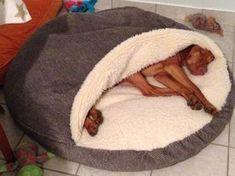 Cozy Cave; hondenmand, warme & veilige plek voor honden om in weg te kruipen [snoozerpetproducts com].