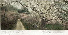 """Wallace Nutting """"A Canopied Road"""" I love Wallace Nutting prints. Classic!"""