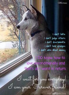 Martina Adoptable Texas Husky Rescue