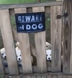 Funny dogs with signs death 58 Ideas Cute Funny Animals, Funny Cute, Funny Dogs, Cute Puppies, Cute Dogs, Dogs And Puppies, Doggies, I Love Dogs, Puppy Love