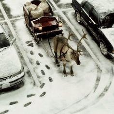 snow winter deer