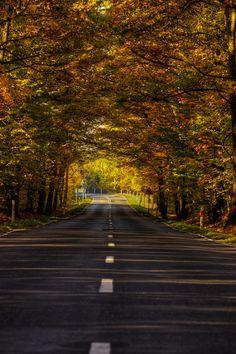 Polish golden autumn by Dawid Martynowski, via 500px