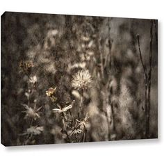 Mark Ross Dormant Wrapped Canvas Art, Size: 24 x 32, White