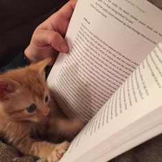 This tiny one who is VERY into his bedtime story. | 23 Cat Pictures That Will Make You Almost Too Happy
