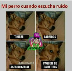 Here are the 35 Best Animal Memes funny & cute pics over the year of Dogs, Cats, Birds & Funny Animal Memes, Funny Dogs, Funny Animals, Cute Animals, Ghetto Humor, Funny Spanish Memes, Spanish Humor, Funny Images, Funny Pictures