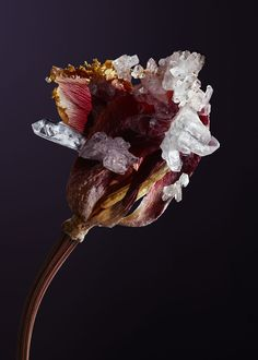 Botanical sculpture art design crystal nature Alyson Mowat