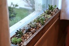 Windowsill succulent garden-  I tend to put my newly rooted succulents in a south facing window so this is a great solution.  Re-pin if you agree.