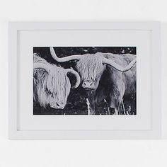 Minted for west elm - Highland Cows