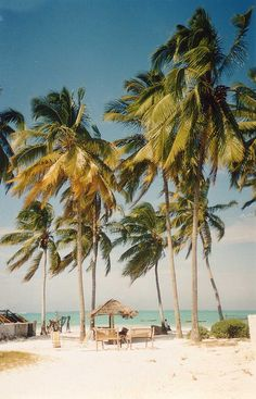 palm trees in Zanzibar