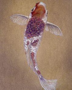New!! 🐠 Mis últimas ilustraciones de animales ya están en la web. Espero que os gusten :) 50x70cm Lápiz de color y tinta plateada sobre papel  #fish #koicarp #koi #pez #carpa  #animal #drawing #dibujo #illustration #ilustracion #art #arte #japan #inspire #oriental #creative #originalwork #artwork #paperart #artist #elisaancori