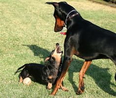 """""""Yeah buddy, MY ball!"""" Ween and dobie?  So happening."""