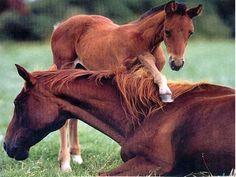 2 cute horses