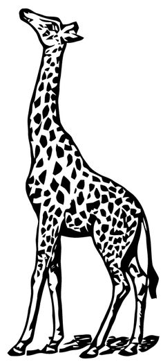 Giraffe And Acacia Tree Silhouette Um African Rubber Stamp