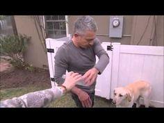 Köpeklere Fısıldayan Adam'ı da Isırırlar