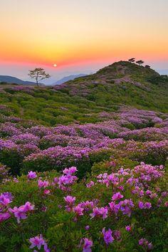 Mount Hwangmae, South Korea,