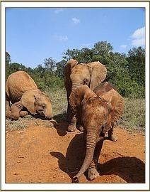 Mashariki, Arruba and Mbegu (8-25-2014)