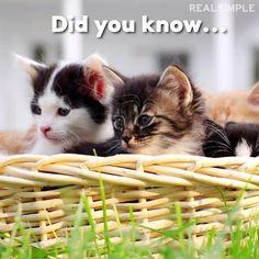 Happy Monday! #cats #love #instagood #photooftheday #beautiful #cute #happy #fashion #followme #me #follow
