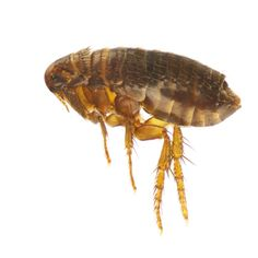 Bug Battle: Choosing the Right Parasite Prevention for Your Pet | Dickinson Animal Hospital