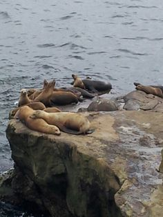 """La Jolla, CA...the seals!!  there were SO MANY on the """"seal beach""""!  so cute =))"""