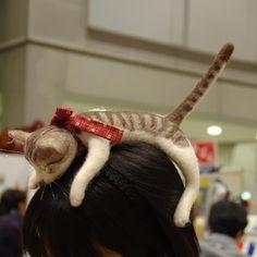 kitten hairband. oh my.