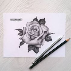 Learn To Draw A Realistic Rose - Drawing On Demand Rose Drawing Tattoo, Tattoo Sketches, Tattoo Drawings, Body Art Tattoos, New Tattoos, Sleeve Tattoos, Rose Drawings, Drawing Flowers, Flower Tattoo Designs