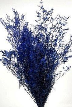 11.99 SALE PRICE! Preserved and dyed cobalt blue Caspia. Caspia is grown and processed in California with a new proprietary process yielding stunning colors....