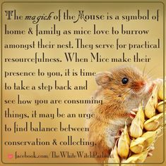 mouse, mice, spiritual, metaphysical, meaning, totem, animal, witch, occult, magick, book of shadows, home, family, collecting, balance, shyness, inspiration facebook.com/thewhitewitchparlour