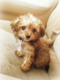 This was what billy looked like when we got him!