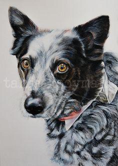 Australian Cattle Dog - Aussie Dog art petportrait hondenschilderij by Tanja Kooymans