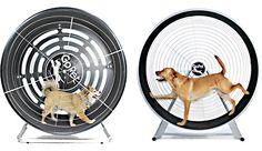 Rueda de ejercicios para perros