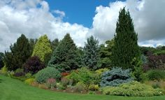 Idea, tricks, also quick guide in pursuance of acquiring the very best end result and also making the maximum usage of Simple Landscaping Evergreen Landscape, Evergreen Garden, Lawn And Landscape, Landscape Design, Privacy Landscaping, Home Landscaping, Amazing Gardens, Beautiful Gardens, Porches