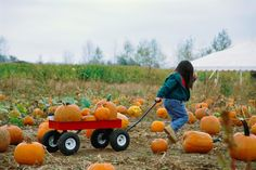 In the fall there is a natural excitement for harvest that has been instilled into us for generations. This is a great opportunity to connect back to agriculture, so get out there and try some of this family-friendly farm fun!  http://www.agfoundation.org/news/5-family-fun-fall-activities