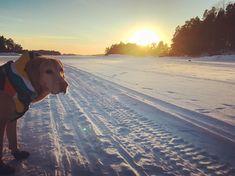 #sunset #rescued #rescuedog #finland #mybestfriend #foxredlabradors #itämeri #jäätie #sommaröarna #rukkapets #homestreet #auringonlasku #talvi #winter #labsofinstagram #winterboots #bootsfordogs #minusdegrees #iceroad
