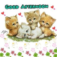 Good Afternoon sister,have a lovely time xxx❤❤❤ Kittens Cutest, Cats And Kittens, Cute Cats, Cute Images, Cute Pictures, Kitten Drawing, Cute Illustration, Beautiful Cats, Cute Baby Animals
