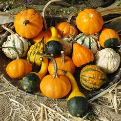 Small Formula Blend Gourd Seeds - 95 Days to maturity from seeding. This is an attractive gourd blend that contains many popular types along with many different and colorful warted types. This is an outstanding gourd blend for fall decorating. Herb Seeds, Garden Seeds, Organic Weed Control, Organic Seeds, Mixed Vegetables, Autumn Garden, Garden Fun, Garden Gate, Cherry Tomatoes