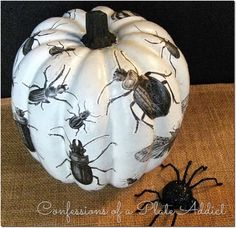 DIY - What's Black and White and BUGGY All Over? My Découpage Insect Pumpkin!