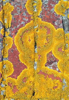 Lichen- great contrast with brick.