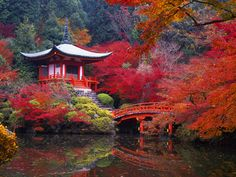 I colori dell'autunno a Kyoto [Foto by JTB Photo]