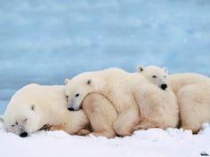 llbwwb: A Bear Hug :) By:artemis