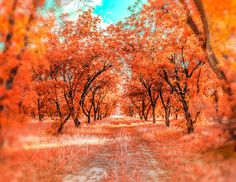 Autumn Nature Print Landscape Photograph by KaleidoscopePhoto on Etsy.
