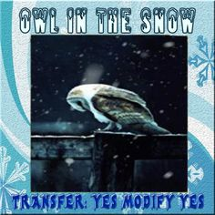BBD - Owl in the Snow