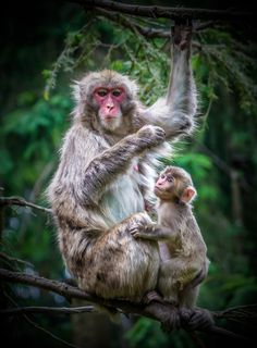 Monkeys Mountain in Carinthia - Austria - http://lightorialist.com/monkeys-mountain-carinthia-villach-austria/