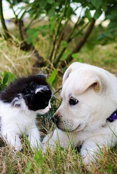 Fuck Yeah Interspecies Friendships